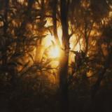 light_enduring_close_up_artist_Matthew_Weatherstone.jpg