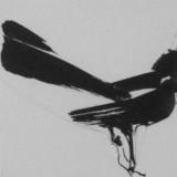 matthew-kentmann-artist-wagtail.jpg