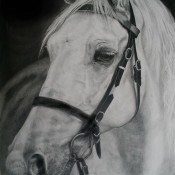 Australian Pony - Equine Art - Pencil on paper 59cm x 42cm.jpg