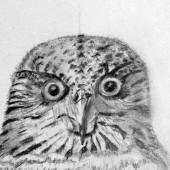 drawing-class-tutor-kristin-hardiman-10.jpg