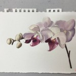 watercolour-painting-course-student-work-2019-3.jpg